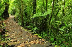 COSTA RICA FOREST PATH.jpg