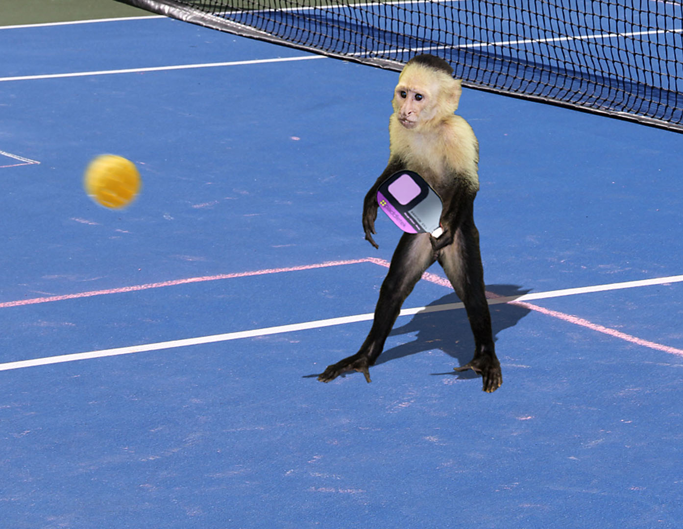 pickleball monkey.jpg